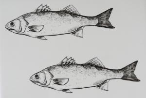 Fish - HouseVitamin
