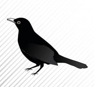 Black Bird - HouseVitamin